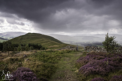 peebles scotland cademuir hill heather peeblesshire tweeddale summer scottishborders borders uk shower rain squall gate path uplands forest