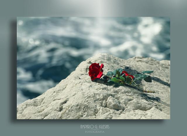 Rosas en el mar - Amparo García Iglesias