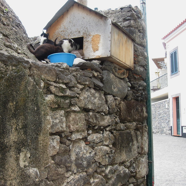 Hostel for feral cats