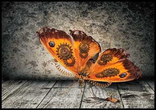 Butterfly 2.0