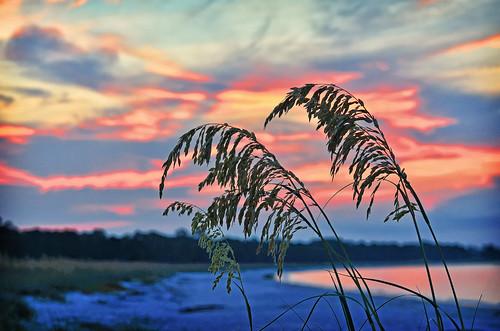 sunrise morning red ocean shore seaoats beach florida landscape outdoors nature
