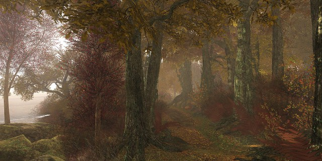 a misty forest walk