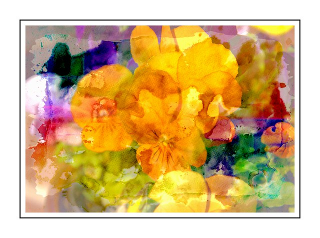 Fine Art Pansies
