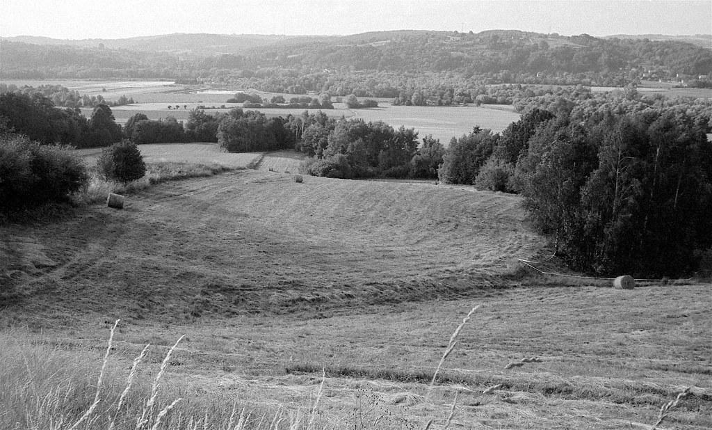 Łąki / Meadows