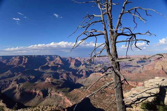 Grand Canyon, Arizona, US 509