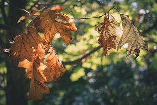 fall-17 | by trevorrichardsmusic