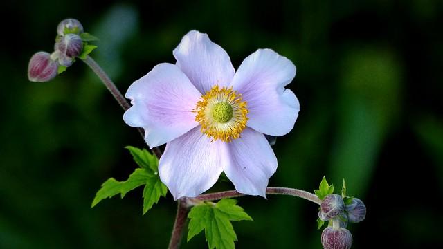 +Kwiat+