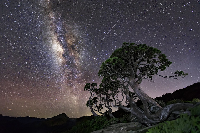 合歡北峰圓柏-銀河-流星