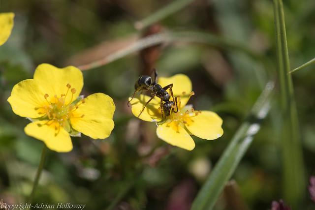 Ant Feeding.