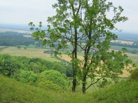 37 tree valley