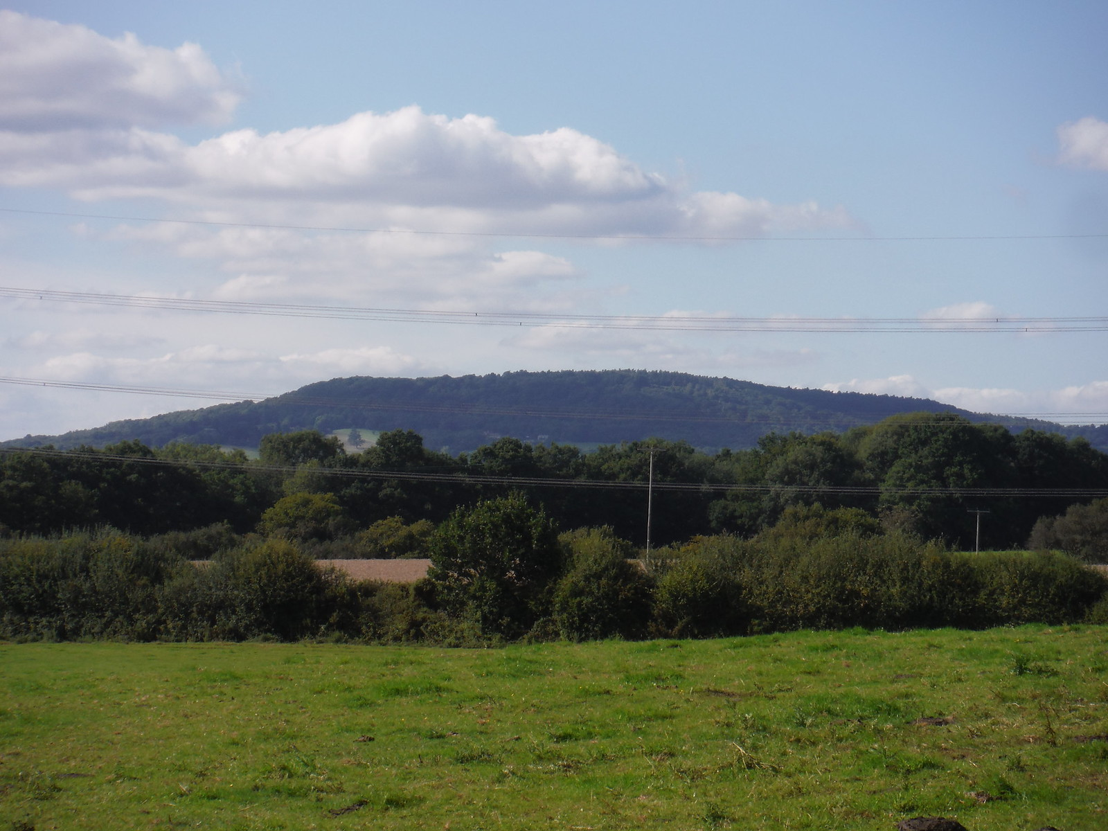 Black Down, from near Lodge Farm SWC Walk 294 - Pulborough to Halfway Bridge (via Tillington)