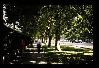 Roadside Trees In Santiago = サンチャゴ市内の街路樹