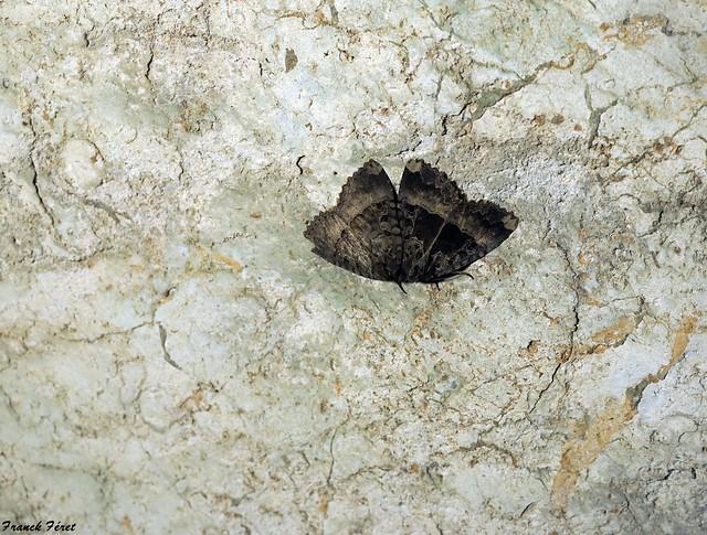 Papillons dans une des grottes de Grillet - Cleron