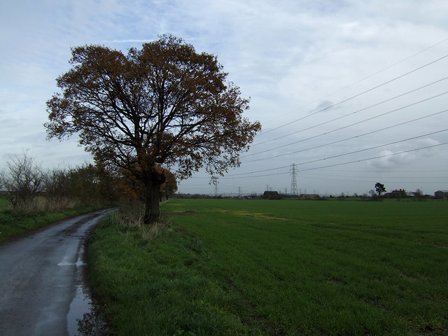 Country lane near Corringham