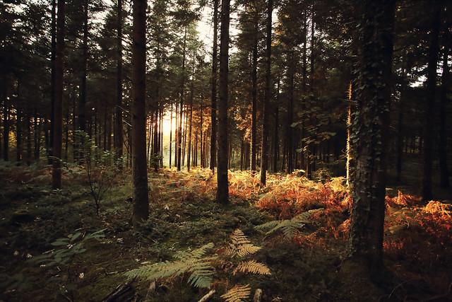 Forêt des Vaseix