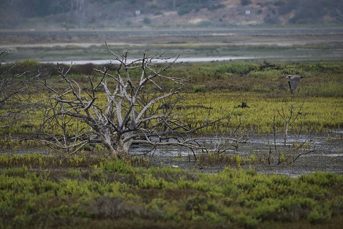 wetlands marsh d800 nature cormorant 200500 scenic tree nikkor earlymorning california bolsachicaecologyreserve