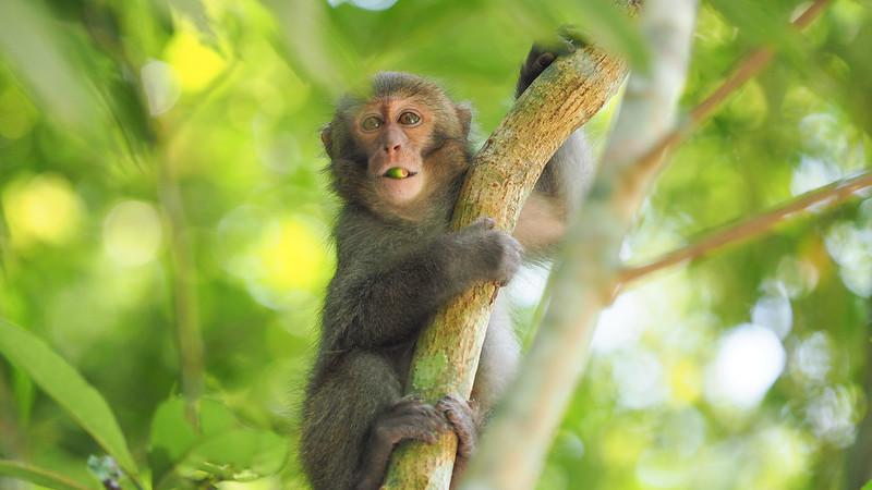 阿猴是你|砂卡礑步道