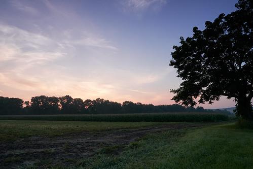 ct connecticut corn farmington sony trees a6300 farm grass morning relaxing sky sunrise sunset unitedstates us