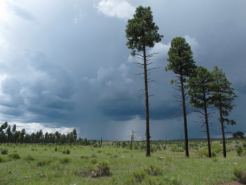 arizona sky stormclouds forest rain weather monsoonskies downpour monsoonthunderstorm navajocounty landscape view monsoon stormy skyscape thunderstorm summermonsoon summerstorms plateaudownpour summer mountainstorm tstorm monsoon2017 arizonamonsoon rimcountry apachesitgreavesnationalforest outdoors exploration adventure discovery wildplaces southwest nature canonpowershotg12 pspx9 zoniedude1 earthnaturelife