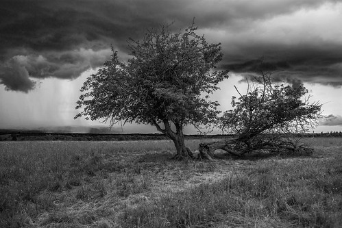 fingerlakesnationalforest fingerlakes nationalforest centralnewyork newyork forest pasture field tree grass sky storm clouds thunder rain spring bw blackandwhite monochrome canon 6d canon6d