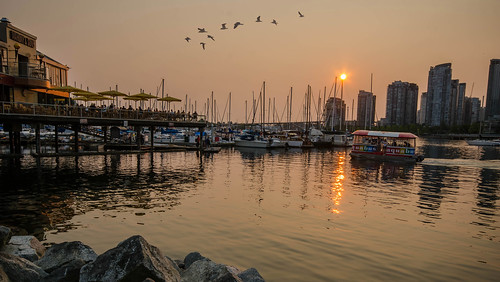 vancouver sunset flock birds waterfront rocks pub public tourism bc canada reflections warm sunlight watertaxi