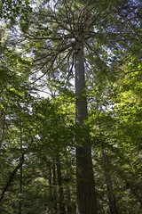 Kejimkujik National Park - Grafton Woods Hiking Trail