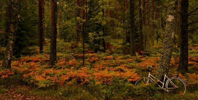 Yksin syksyllä