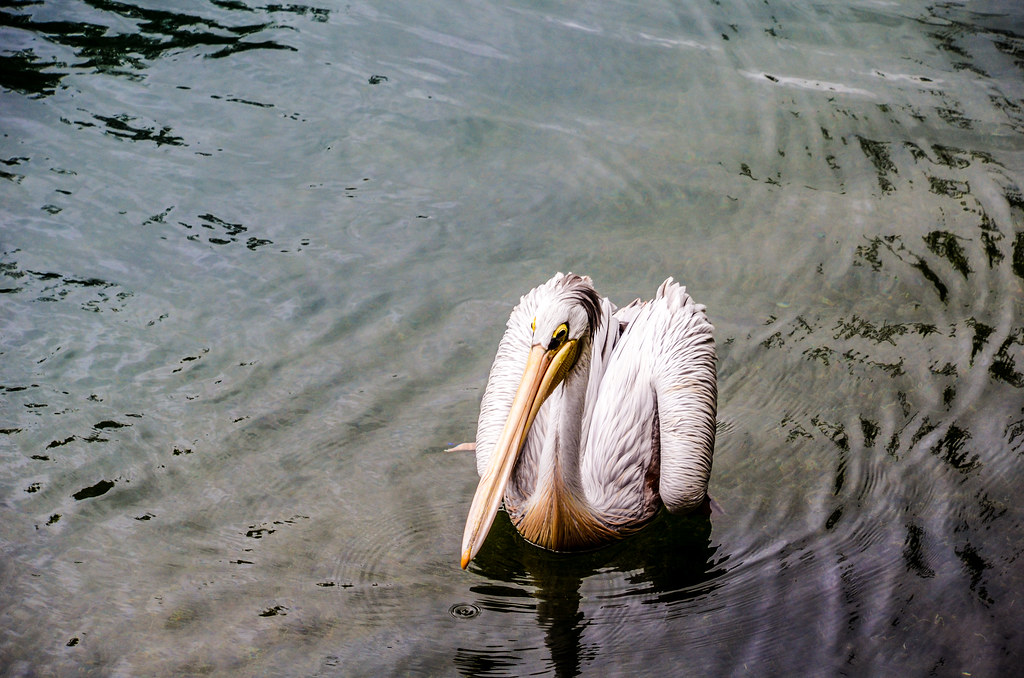 Bird WAT AK