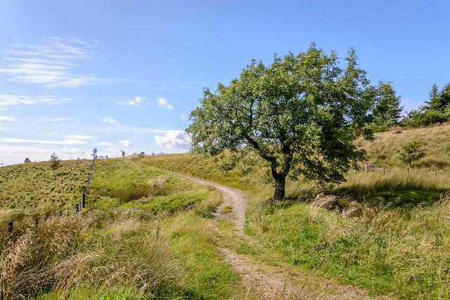 DSC_0094 - Near Crown Point, Burnley