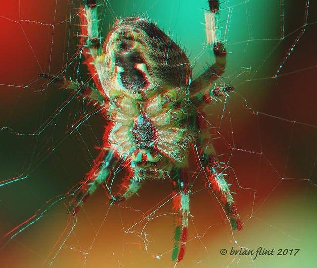 Spider - 3d anaglyph