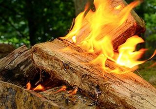 Firewood | by USDAgov