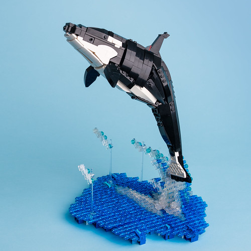 3 Killer whale