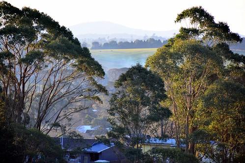 dorrigo dorrigosteamrailway scenery australia nsw cattle guyfawkesriver pointlookout cathedralrock sunset ocean mountains hills landscape loxpix loxworx loxwerx l0xpix