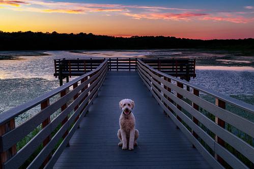 portrait dock landscape sunset dog sky fishingpier doodle lakemarguerite helmetta newjersey unitedstates us