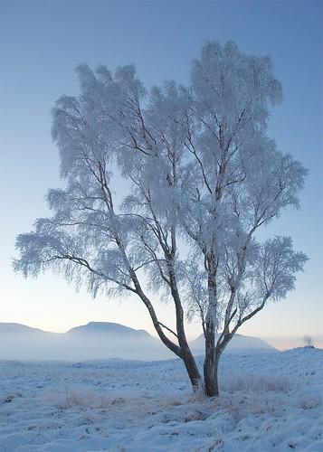 tree snow glencoe scotland uk rannoch moor sunrise