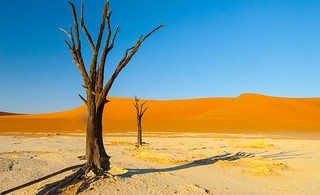 Dead Vlei at first light