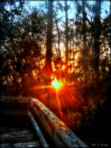 catchingsomerays sunset sprucecreekpark sun sunsrays fence walkway forest trees nature happyfencefriday hff