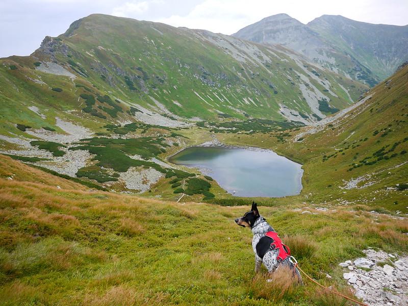 łatwe szlaki tatrach psem