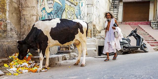 La vaca y el Santón