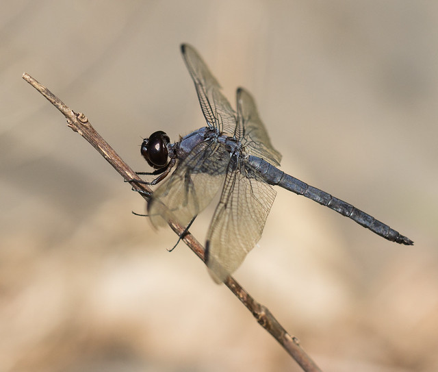 Dragonfly in Autumn