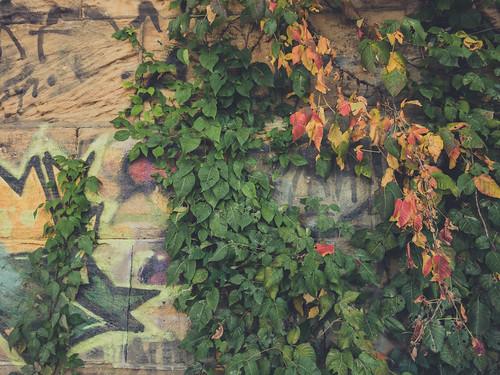 fall-28 | by trevorrichardsmusic