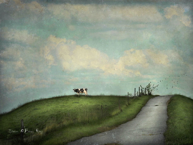 Greta The Cow