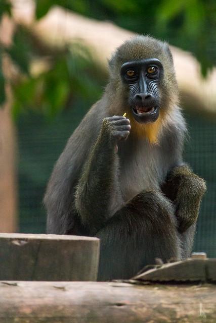 Paignton Zoo Part 2