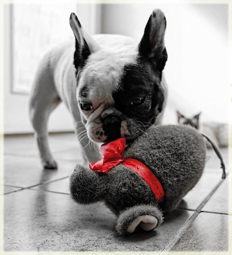 Daisy takes Bella's mouse... | by marneejill