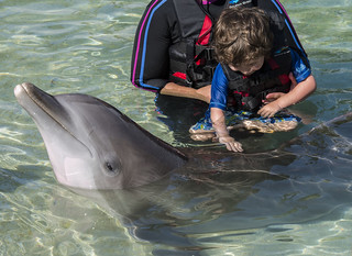 Dolphin Quest, Hawaii Island, USA - DSC_3862 | by peterbryan718