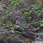 01 Viajefilos en las Batu Caves 10