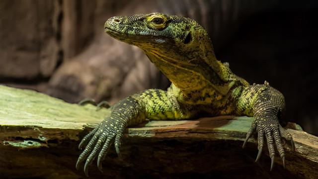 Happy World Lizard Day!