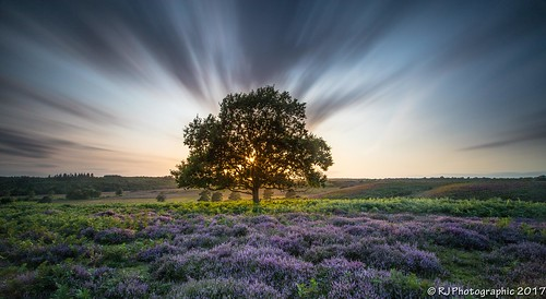 09 grads leefilters newforest sunset burbush clouds countryside cows fauna flora fungi hard heather longexposure national neutraldensity o6 outdoors park pond soft trees water