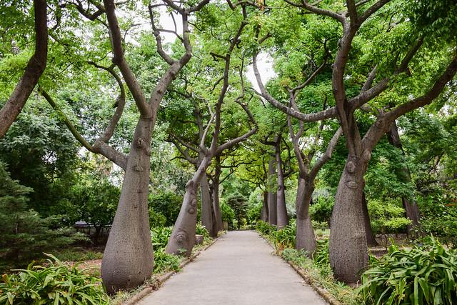 Palermo: Orto Botanico