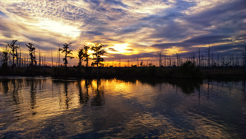 trees sunset canal nokia louisiana smartphone coastal swamp wetlands cypress waterscape gulfcoast dulac terrebonneparish ilobsterit lumia1020